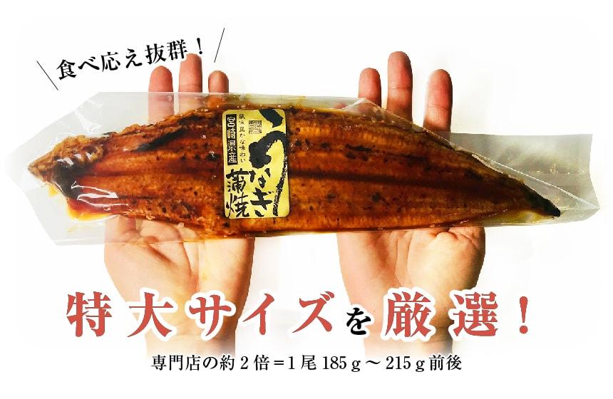 うなぎ(鰻・ウナギ)は特大サイズを厳選